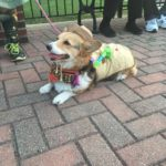 corgi pet parade pcpe 16